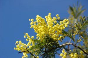 yellow-flower-661561_960_720