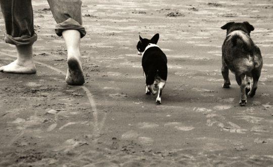 Met je huisdier op vakantie naar de Côte d'Azur