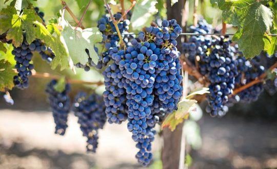 De 3 beste wijnkelders in de omgeving van Saint-Tropez