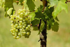 wijnkelders Saint-Tropez